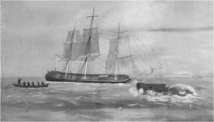 wikiwhaling1